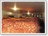Холодильные камеры с овощами