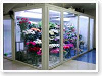 Холодильные камеры с цветами
